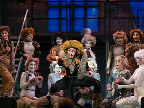 Cast of CATS, performing at Princess Theatre, Torquay.